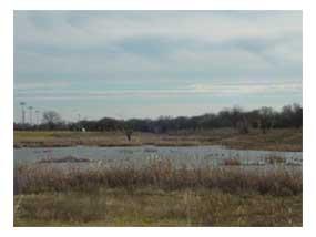 Bog\Marsh\Swamp