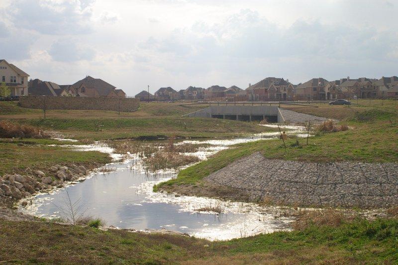 Beaver suburban dam building dfw urban wildlife for Pond dam design