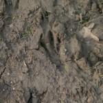 Beaver - Tracks