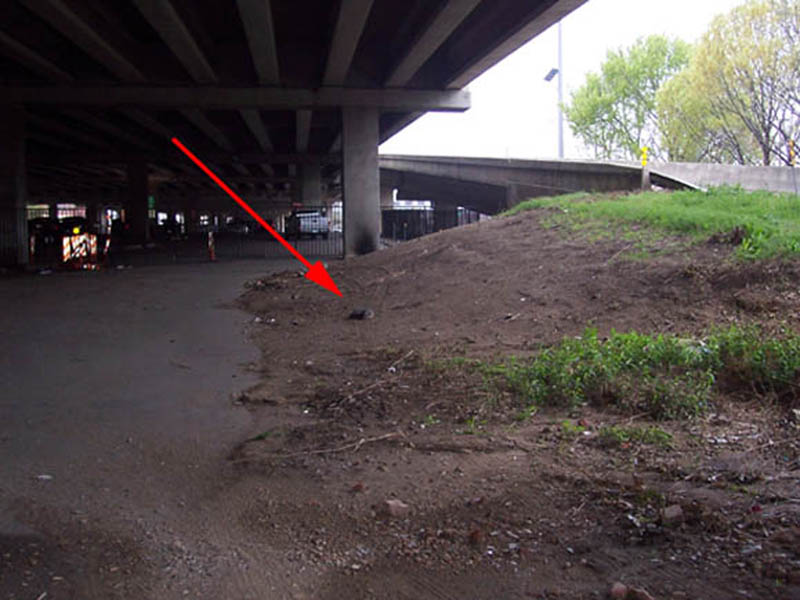 To my surprise, the fox was still there! He had moved down from the grass up close to the entrance ramp, and was now lying in the dirt close to the public parking area. The arrow in the picture above indicates the fox's location.