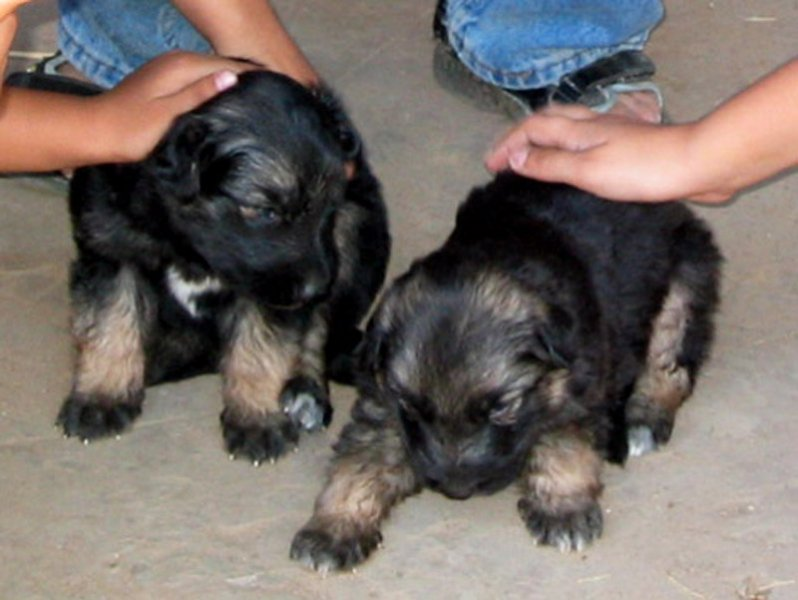 Puppies in Ahmedabad, India