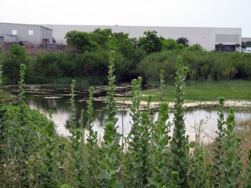 The pond is an oasis of wilderness nestled in the midst of urban sprawl.