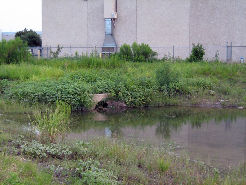 This culvert drains the pond. The beaver has repeated plugged it up.