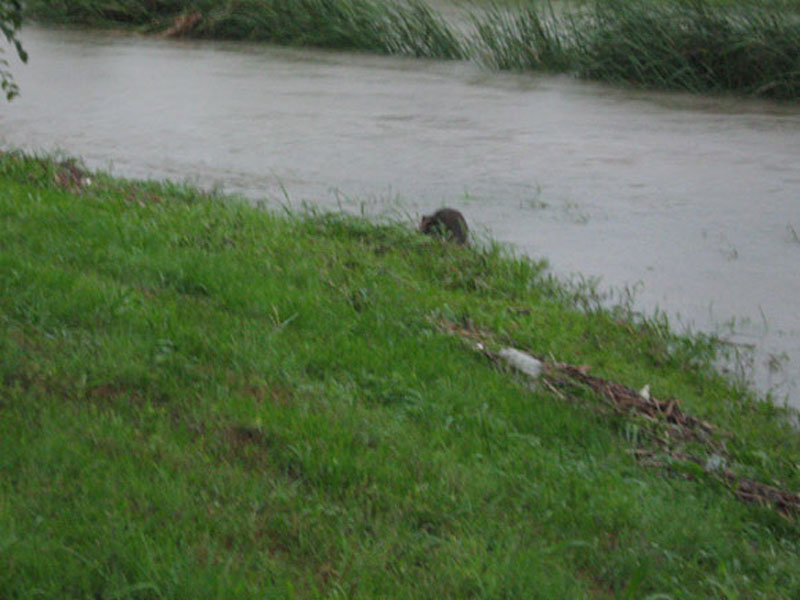 This is how the Beaver looked from the roadside.