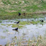 Journal – The Dredging of Woodlake Pond