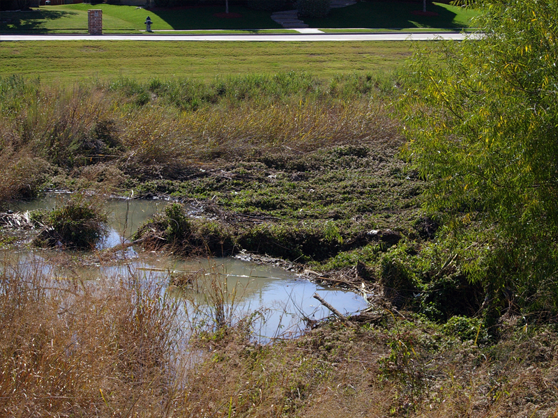 The Beaver's dam. It is constructed mostly of reeds and mud.