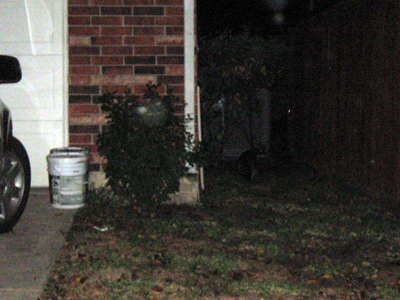 Once on the ground the Raccoon darted away between two houses and into the darkness.