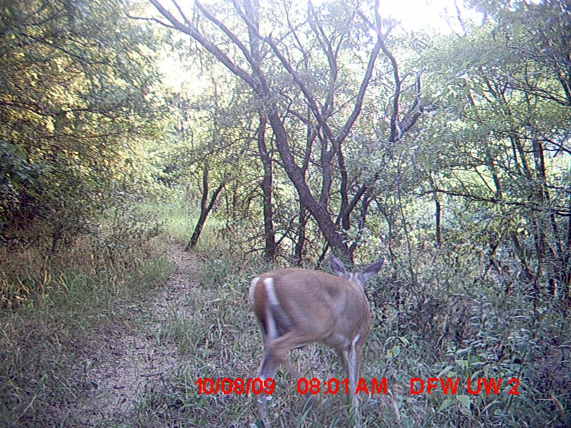 White-tailed Deer - There and Back Again