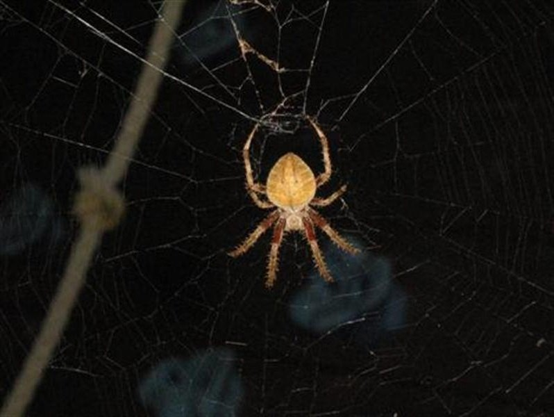 Here's our spider sporting various shades of light browns, dark browns, and blacks.