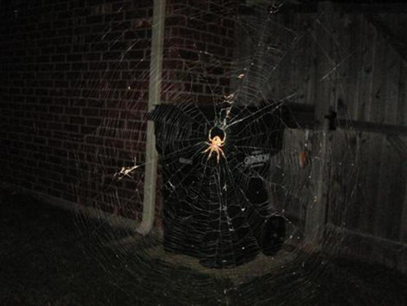 The spider and its web.