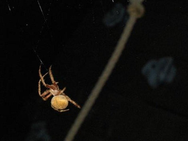 The next several pictures are of the spider building a new web.