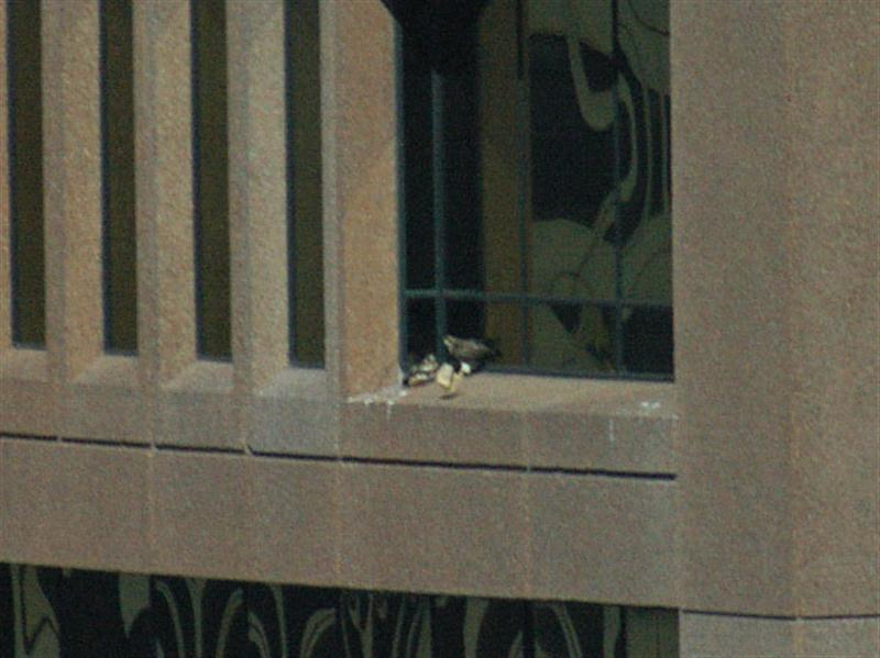 The wind continued to whip the paper around on the ledge before finally blowing it off the ledge. The two bird seem to be watching the paper intently as it moves around on its own.