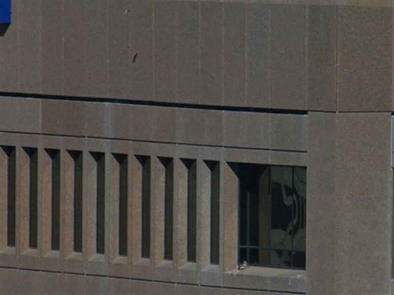 This picture has been zoomed out a bit so that you can see just how far up and away the wind has carried the piece of paper. Note the paper and its shadow near the top center of the photograph. The hawk is on the ledge in the lower right-hand corner of the picture.