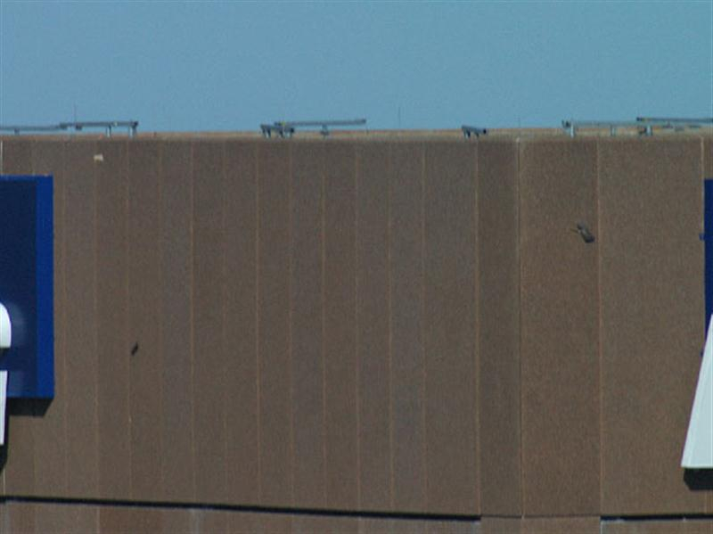 As the piece of paper nears the top of the building (near the blue sign at the top, left), the second hawk comes back into the picture, zooming by my field of view at high speed. That is him in the top right of the photo, just past the corner of the building. The entire episode of bringing the paper and losing the paper lasted a total of only 3 or 4 minutes.