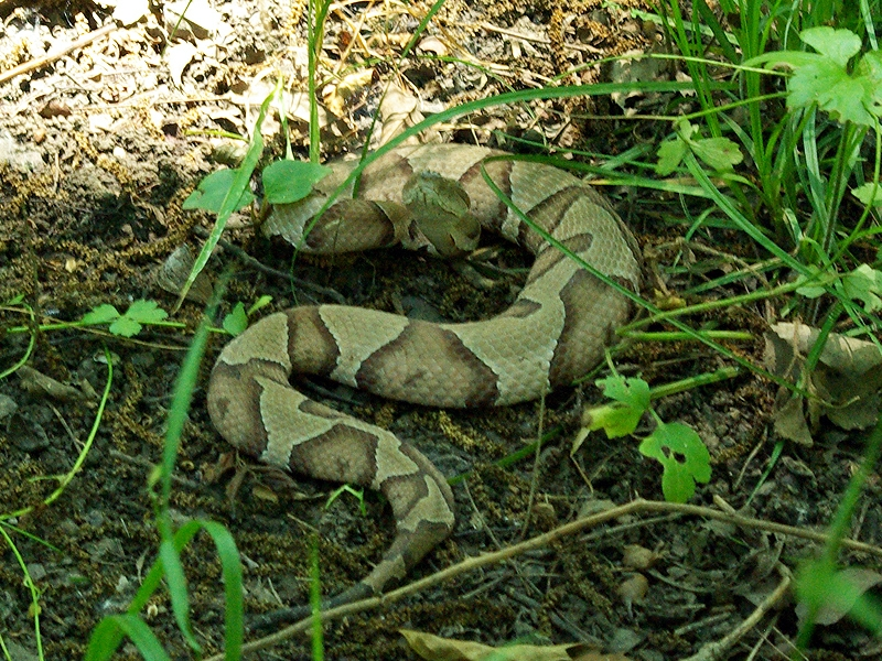Copperhead - Speed Bump