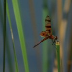 Halloween Pennant - On Display