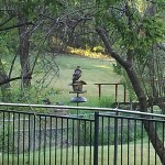 Red-tailed Hawk - Bird Feeder