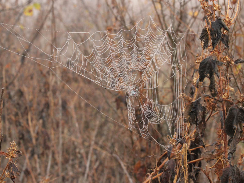 A dew covered spider-web.