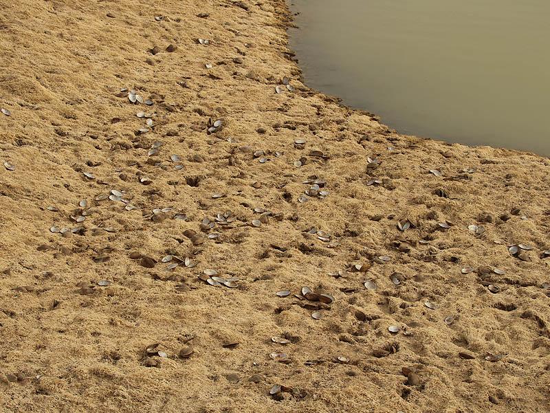 Giant Floater - Dead Zone