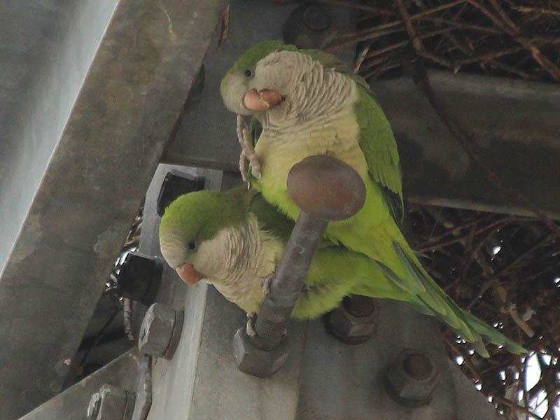 One bird scratches...