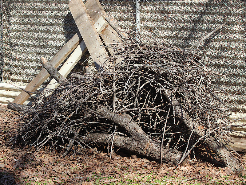 These Great Blue Heron nests were salvaged from a dead tree that had to be cut down for safety reasons.