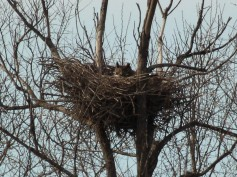 Nest One - Zoomed In