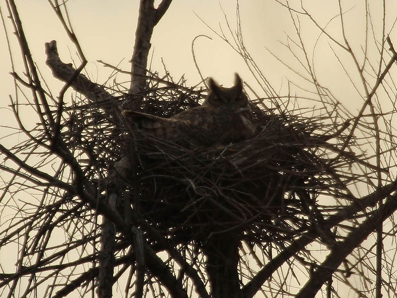 Nest Two - Zoomed In