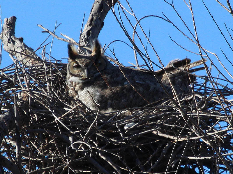 North Nest - This nest is titled toward the best vantage point in a way that will allow for wonderful observations of the young birds after they hatch.