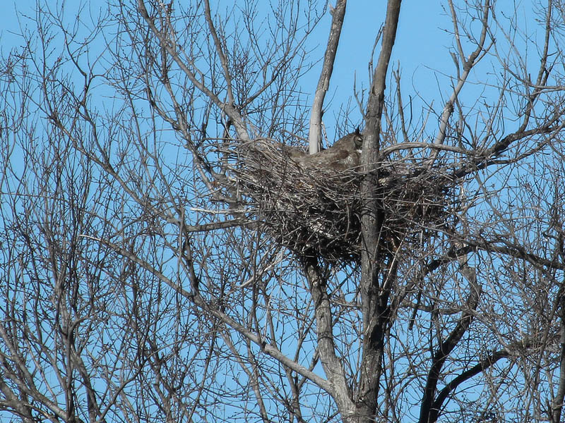 South Nest - The owl did not cooperate with us this time around.  She kept her back turned to us the entire time we were there!