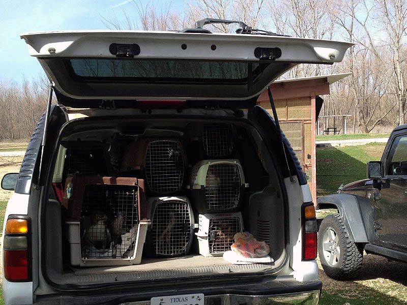 Loaded up with Raptors at the Rogers Wildlife Rehabilitation Center.