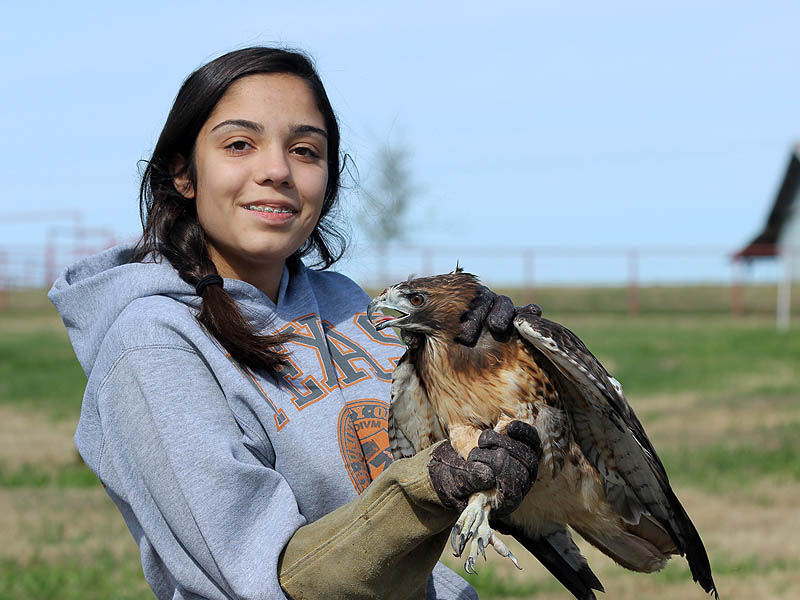 Red-tailed Hawks were the first to be set free.