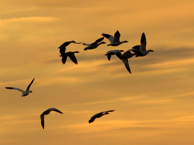 These birds were beautiful against the dramatic sunset.