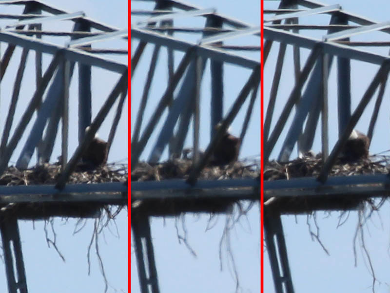 In this sequence you can see clear movement by the eaglets.
