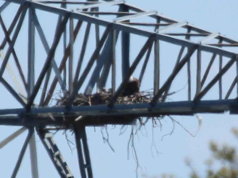 This picture appears to show both of the suspected eaglets together.