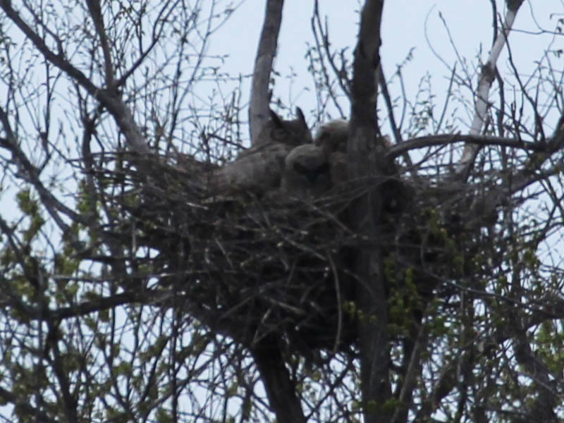 The south nest.