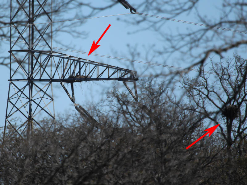 The eagle nest (left) and the hawk nest (right) side by side.