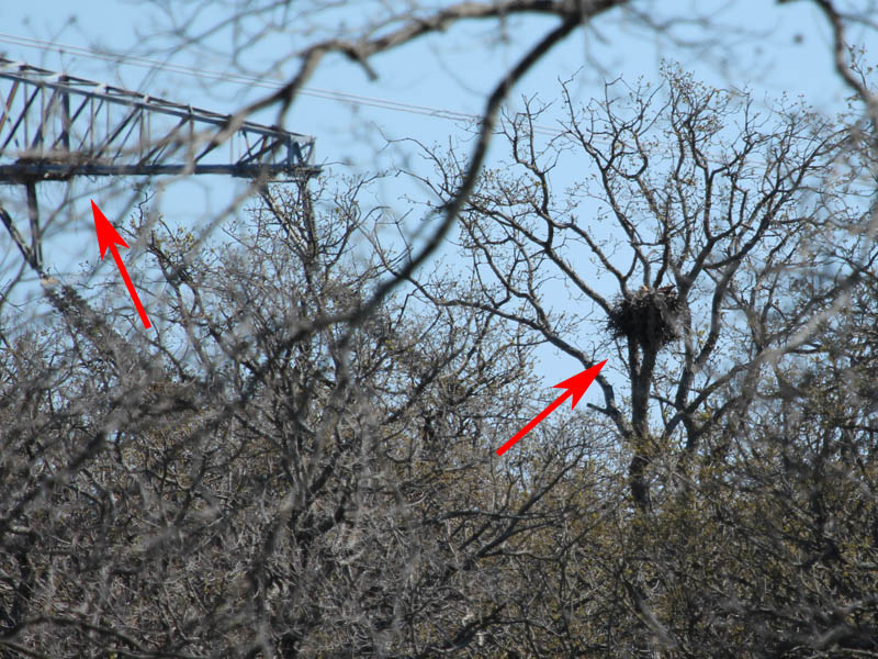 Another look at the two nest.