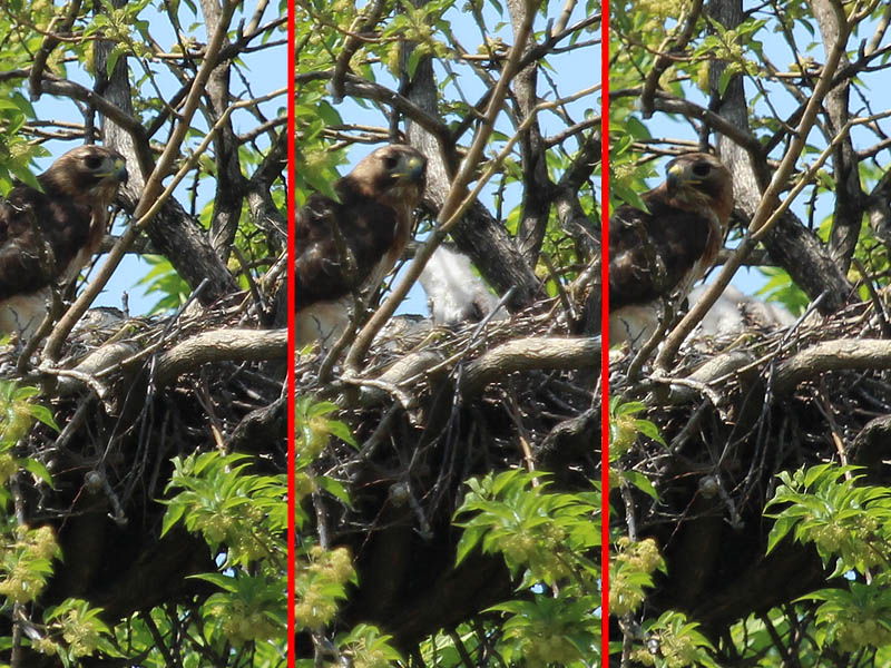 Then there was a great deal of movement coming from inside the dish of the nest.