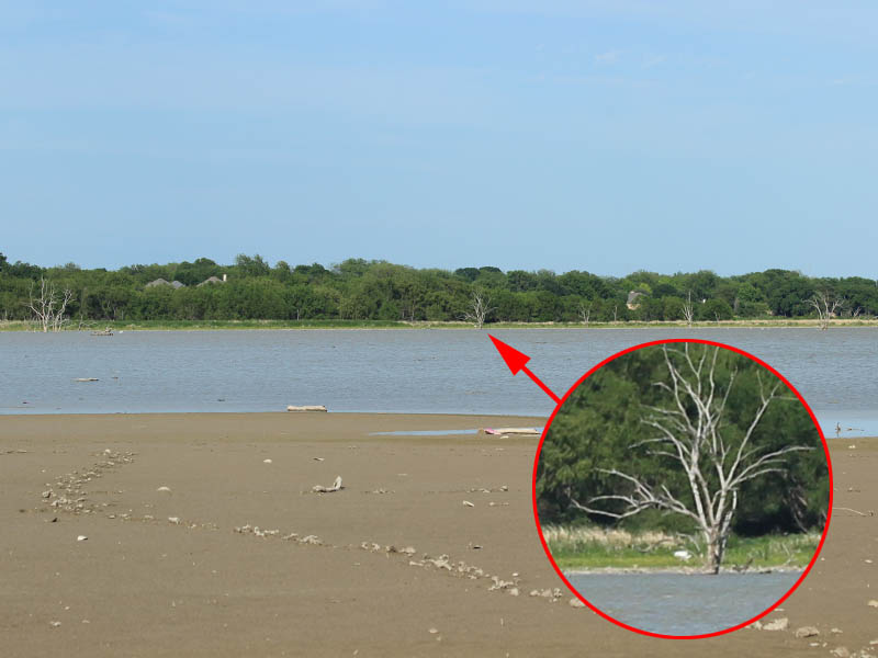 This picture gives some context.  The cranes are under the tree indicated with the red arrow.