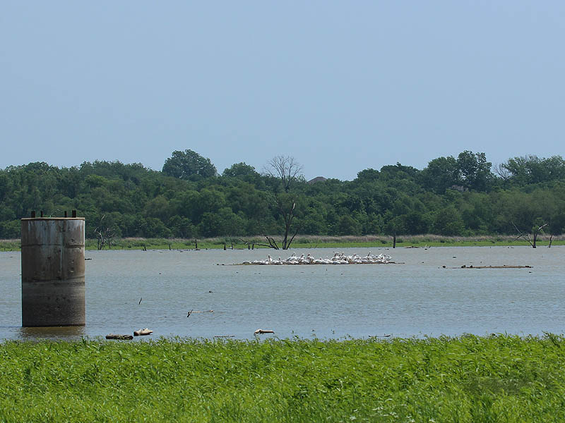 American White Pelicans congregate on the small islands near the north end of the lake.