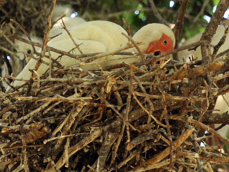 Care of Young, Nesting