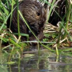 Nutria - To The Lily Pads