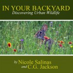 Announcement - In Your Backyard