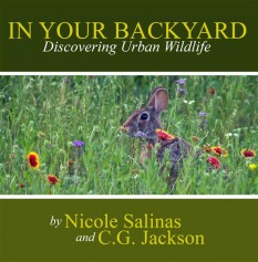In Your Backyard: Discovering Urban Wildlife by Nicole Salinas and C.G. Jackson