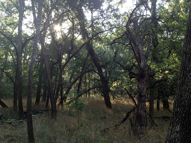 Typical Texas bottomland forest.