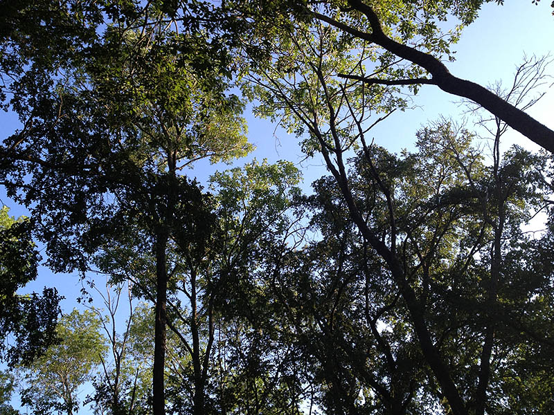 The tree canopy.