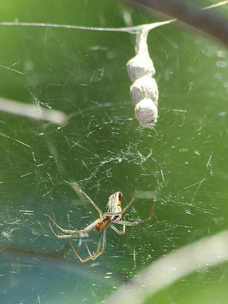 Basilica Spider - More