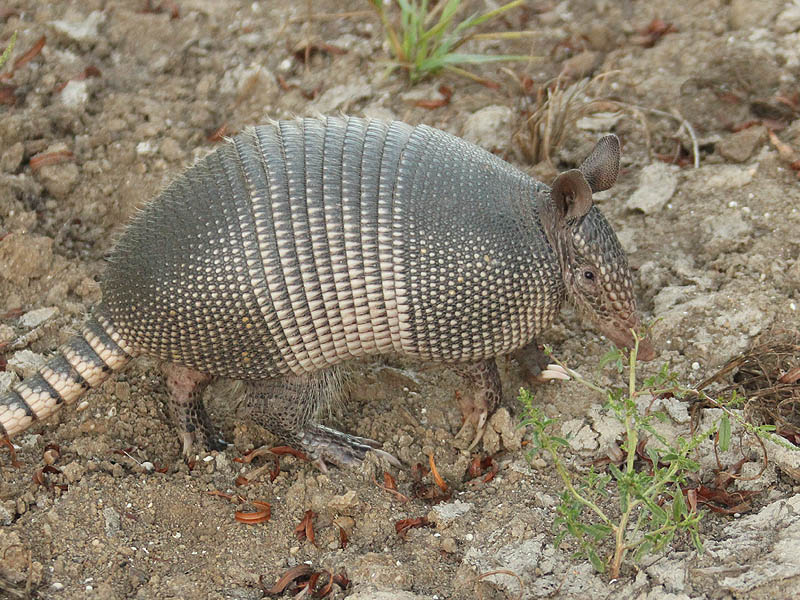 Armadillo - Assistance