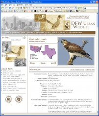 A Natural History Page for the Red-tailed Hawk