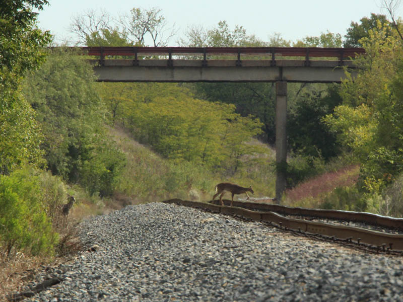 A small herd of deer crossing the railroad tracks.